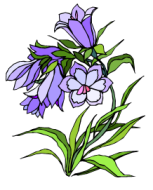 פרחי באך-1